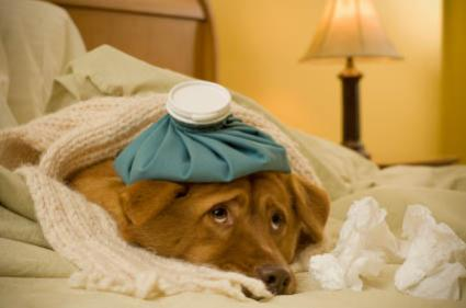 65835-425x281-sick_dog_in_bed